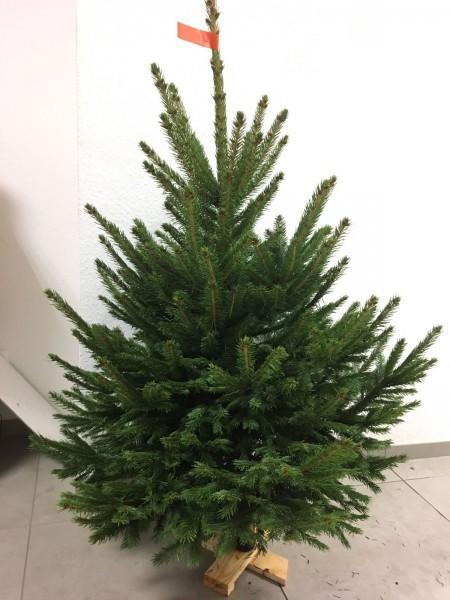 Weihnachtsbaum Blaufichte auf Holzkreuz