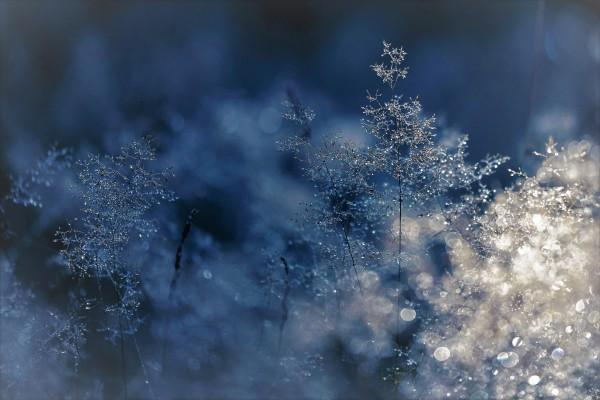 Weihnachtsfilme-Drei-Haseln-sse-f-r-Aschenbr-del